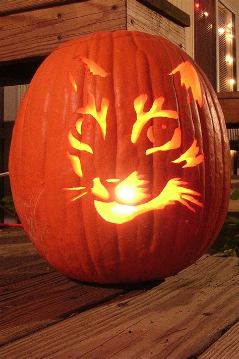 cat pumpkin cat pumpkin carving pumpkin carving scary