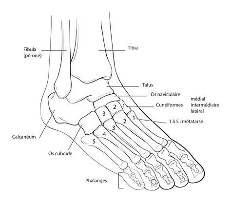 pied de le pied et cheville dr philippe loriaut chirurgien