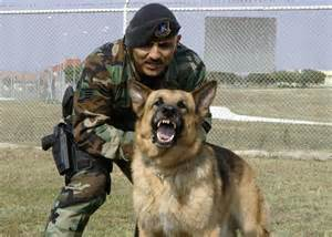 Military Dog and Handler