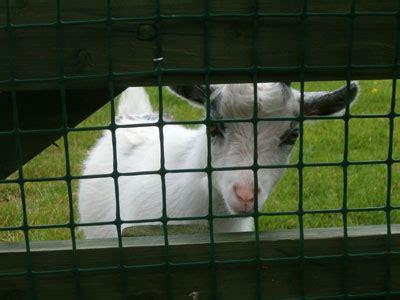 world farm animals day  october calendarlabs