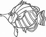 Coloring Angel Fish Pages Drawing Nice Angelfish Getcolorings Getdrawings Drawings sketch template