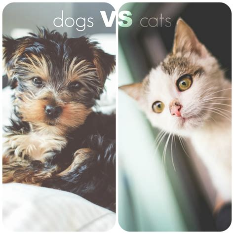 Cats Vs Dogs What's The Best Apartment Pet?  Tenley View