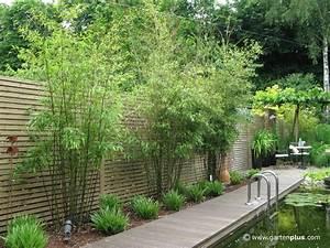 Garten Sichtschutz Pflanzen : sichtschutz garten pflanzen google suche pinteres ~ Watch28wear.com Haus und Dekorationen