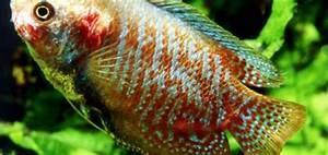 Co2 Bläschen Berechnen : fischtuberkulose aqua ~ Themetempest.com Abrechnung