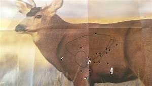 Shot Placement Deer Shot Placement Chart 401000x1291