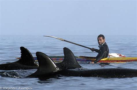 Falsas Orcas En La Bahia De Puerto Pirámides