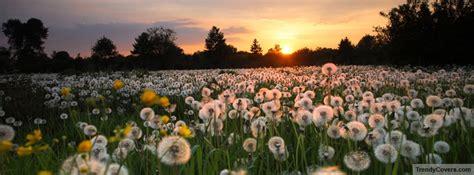 Spring Season Flowers Facebook Cover Trendycoverscom