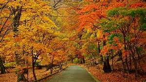 Top 15 hình nền mùa thu tuyệt đẹp cho máy tính