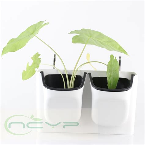 best decorative indoor plant pots photos interior design ideas angeliqueshakespeare