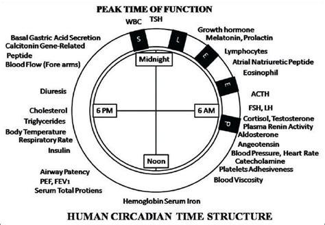 hacks  keeping  circadian rhythm zeitgebers