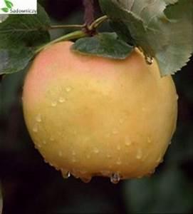 Wann Apfelbäume Schneiden : apfel kronselka ~ Lizthompson.info Haus und Dekorationen