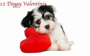 12 Valentine 39 S Day Cards Perfect The Dog Lover In Your ...