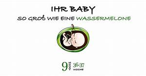 Schwangerschaft 3 Trimester : ssw 36 schwangerschaftswoche 36 ~ Frokenaadalensverden.com Haus und Dekorationen