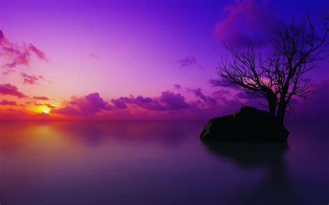 Purple Tree Wallpapers - Wallpaper Cave