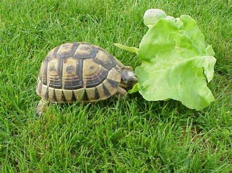 nourrir mon reptile blog