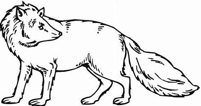 Fox Coloring Pages Animals Looks Clipart Realistic