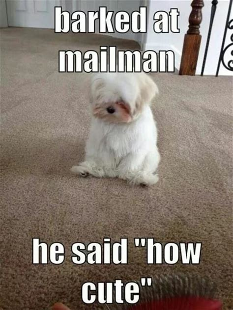 Sad Animal Memes - sad dog memes image memes at relatably com