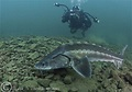Underwater Photo Location: Eccleston Delph