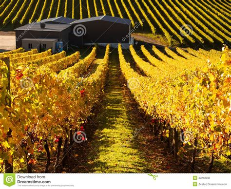 Vineyard In Adelaide Hills Stock Photo Business Card Psd Download Template A4 Paper Dymo Scanner Outlook Visiting Logo Free Printing Company La Reader Compatible Woolwich
