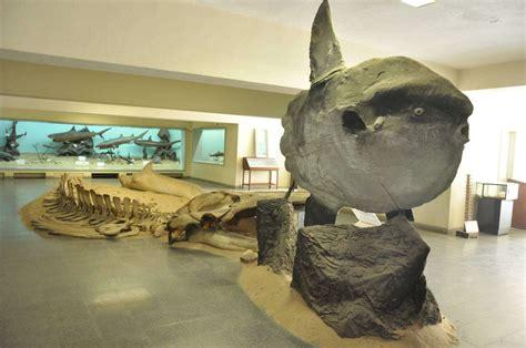 Museu de História Natural reabre as portas - Rede Angola ...