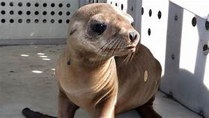 $5,000 Reward Offered for Baby Sea Lion Stolen From Los ...