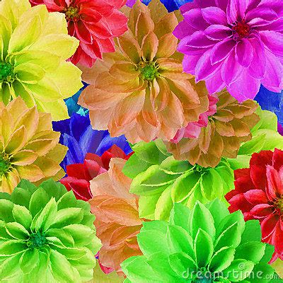 big colorful flowers colorful large flowers stock image image 13928851