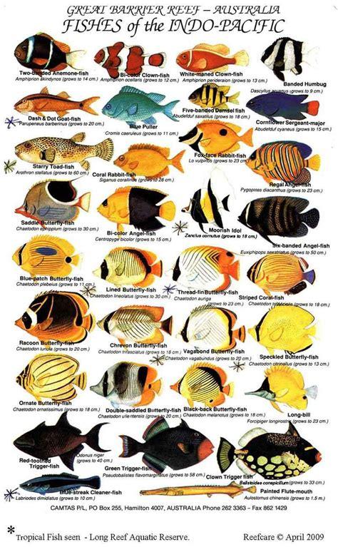saltwater aquarium fish guide saltwater aquarium fish