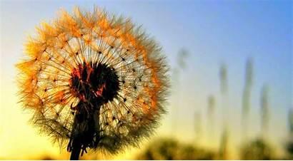 Bunga Gambar Cantik Indah Bagus Yang Keren