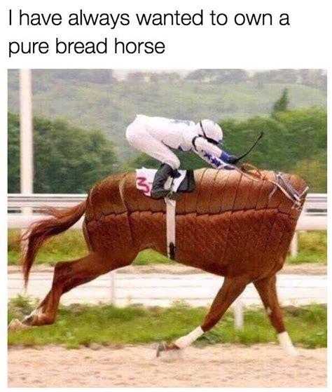 horse funny puns memes animal horses humor animals hilarious meme always cute quotes jokes clean pun corny equestrian laugh funnies
