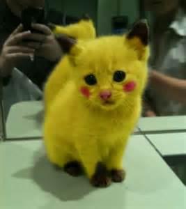 best cats for best cat by daisuki spain on deviantart