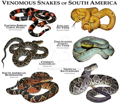 Snake Breeds The 25 Best Snake Breeds Ideas On Pinterest Kinds Of