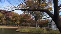 代代木公園 2015.11.11 - YouTube