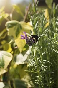 Jason U0026 39 S Guide To A Bee Friendly Garden