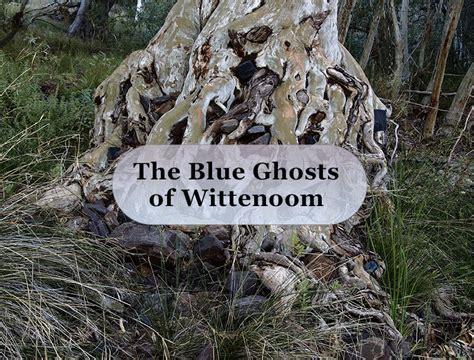 blue ghosts  wittenoom watodaycomau