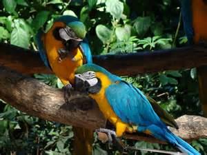 Brazil Amazon Rainforest Animals