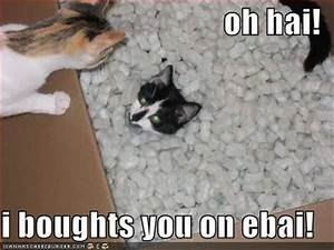 Very funny cat pictures funny captions and cat pictures ...
