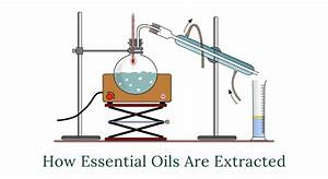 How Essential Oils Are Extracted - Part I
