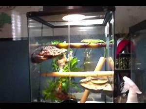 giant day gecko setup - YouTube