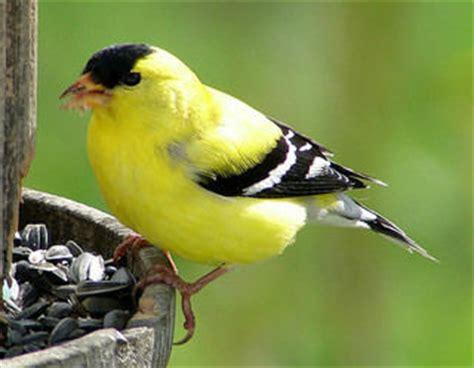 birds of western md and deep creek lake deepcreeklist com