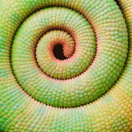 golden ratio plants phi or golden mean ratio 15 plants that teach us sacred geometry at its finest stillness in