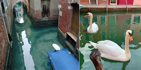 el agua de los canales de venecia se esta aclarando debido