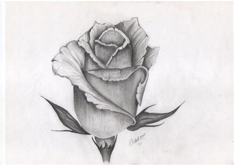 tattoo design  rose bud