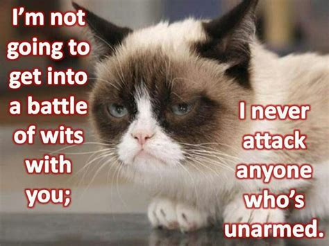 520 Best Images About Grumpy Kitty On Pinterest