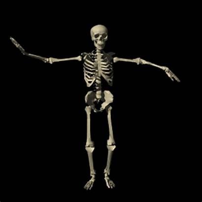 Skeleton Systems Unit Class Health Grade