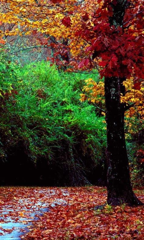autumn forest nokia mobile wallpapers  mobile phone
