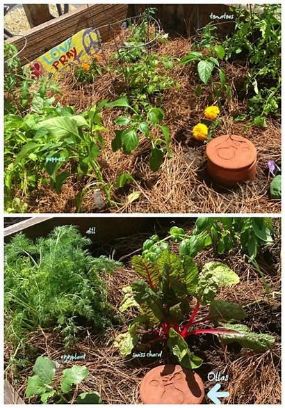 Garden Ollas Planting April Gardening Grits Grace