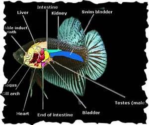 Betta Internal Diagram