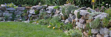 pflanzen für trockenmauer die 10 sch 246 nsten pflanzen f 252 r trockenmauer und co