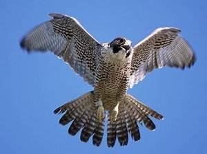 Vitesse Des Animaux : quels sont les animaux qui volent le plus vite au monde ~ Medecine-chirurgie-esthetiques.com Avis de Voitures