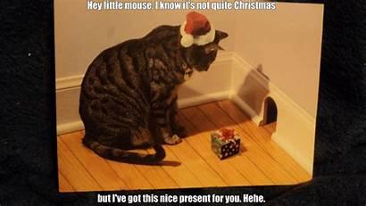 Cat Funny Meme Grumpy Humor Wallpapers Memes